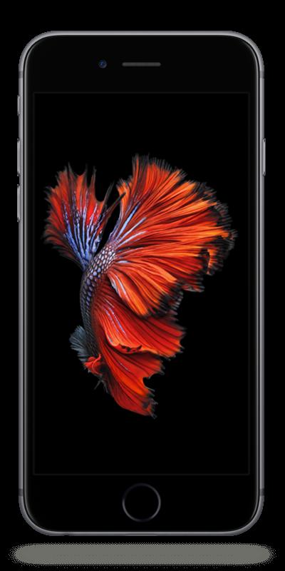 Apple iPhone 6s | Bouygues Telecom