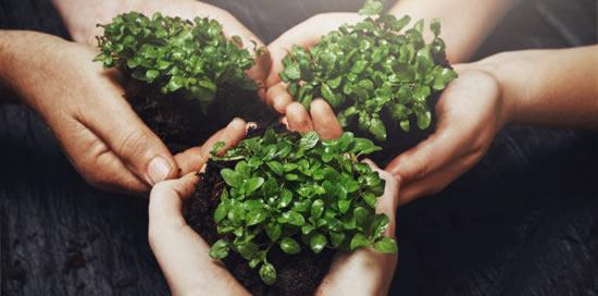 Visuel mains tenant des plantes - Bouygues Telecom